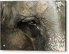 Elephant Acrylic Print by Melissa Petrey