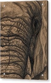 Acrylic Print featuring the drawing Elephant Memories by Tamyra Crossley