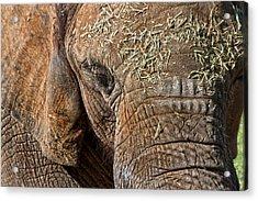 Elephant Never Forgets Acrylic Print