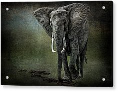 Elephant On The Rocks Acrylic Print