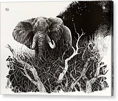 Elephant Acrylic Print by Paul Illian