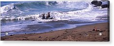 Elephant Seals In The Sea, San Luis Acrylic Print by Panoramic Images