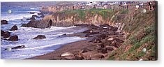 Elephant Seals On The Beach, San Luis Acrylic Print by Panoramic Images