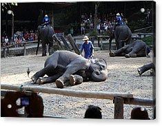 Elephant Show - Maesa Elephant Camp - Chiang Mai Thailand - 011316 Acrylic Print by DC Photographer