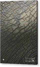 Elephant Skin Acrylic Print