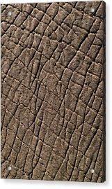 Elephant Skin, Zimbabwe Acrylic Print