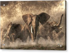 Elephant Stampede Acrylic Print