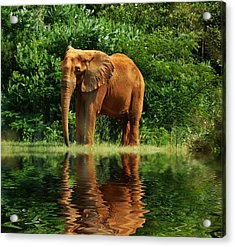 Elephant The Giant Acrylic Print by B Wayne Mullins