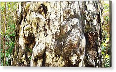 Elephant Tree Acrylic Print by Van Ness