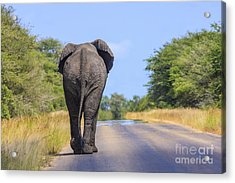 Elephant Walking Acrylic Print