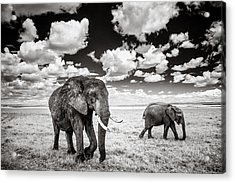 Elephants And Clouds Acrylic Print