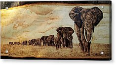 Elephants Are Contagious Acrylic Print by Ciprian Macovei