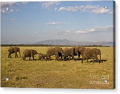 Acrylic Print featuring the photograph Elephants At Lake Manyara by Chris Scroggins