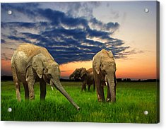 Elephants At Sunset Acrylic Print by Jaroslaw Grudzinski