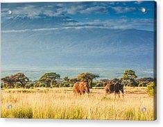 Elephants In Front Of Mount Kilimanjaro Acrylic Print