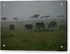 Elephants In Heavy Rain Acrylic Print by Menachem Ganon