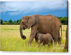 Elephants In Masai Mara Acrylic Print