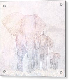 Elephants - Sketch Acrylic Print by John Edwards