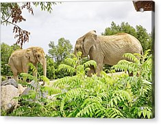 Elephants Thika And Toka At The Toronto Zoo Acrylic Print