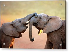 Elephants Touching Each Other Acrylic Print by Johan Swanepoel