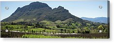 Elevated View Of Vineyard, Delaire Acrylic Print by Panoramic Images