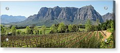 Elevated View Of Vineyard Acrylic Print by Panoramic Images