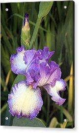 Elfreada's Iris Acrylic Print