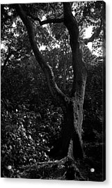 Acrylic Print featuring the photograph Elizabethan Gardens Tree In B And W by Greg Reed
