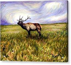 Elk At Dusk Acrylic Print by Ric Darrell