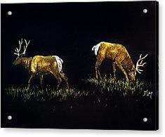 Elk Bulls Acrylic Print