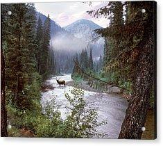 Elk Crossing 2 Acrylic Print