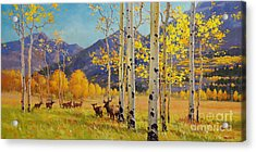 Elk Herd In Aspen Grove Acrylic Print by Gary Kim