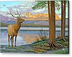 Elk In The Sawtooths Acrylic Print by Paul Krapf