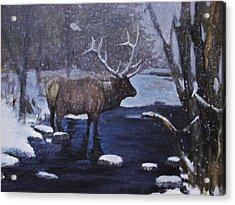 Elk In The Wilderness Acrylic Print