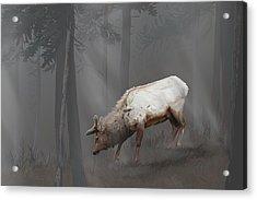 Elk In Velvet Fog Acrylic Print
