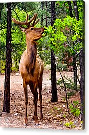 Acrylic Print featuring the photograph Elk - Mather Grand Canyon by Bob and Nadine Johnston