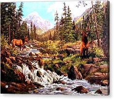 Elk Meadows Acrylic Print by W  Scott Fenton