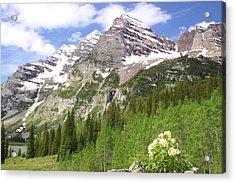 Elk Mountains Acrylic Print