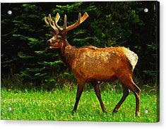 Elk Portrait Acrylic Print by Ayse Deniz