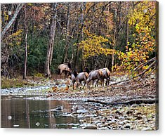 Elk River Crossing Acrylic Print