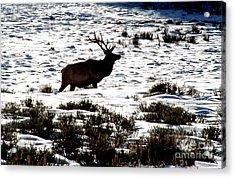 Elk Silhouette Acrylic Print by Sharon Elliott