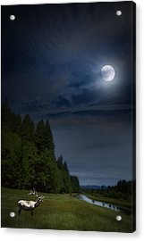 Elk Under A Full Moon Acrylic Print