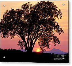 Acrylic Print featuring the photograph Elm At Sunset by Alan L Graham