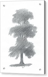 Elm Tree Drawing Number One Acrylic Print by Alan Daysh