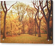 Elm Trees - Autumn - Central Park Acrylic Print by Vivienne Gucwa