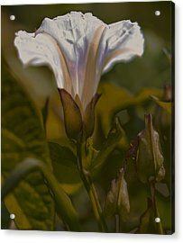 Acrylic Print featuring the photograph Elsewhere by Leif Sohlman