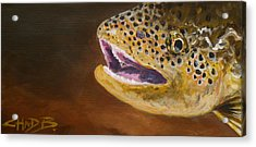 Elusive Brown Acrylic Print by Chad Berglund