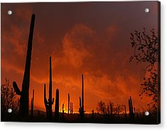 Embers Of The Day Acrylic Print by Justin  Curry