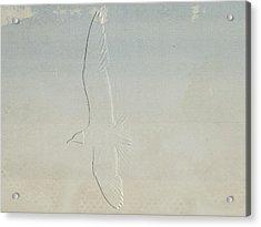 Embossed Gull Acrylic Print