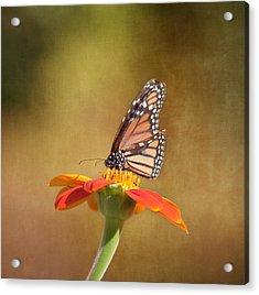 Embracing Nature Acrylic Print by Kim Hojnacki